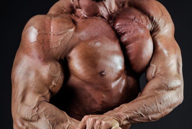上半身の筋肉