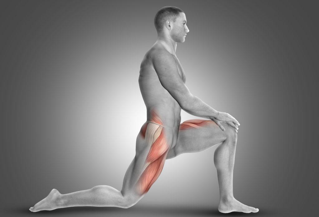 大腿部の筋肉 イメージ図
