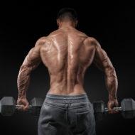 脊柱起立筋が発達した男性