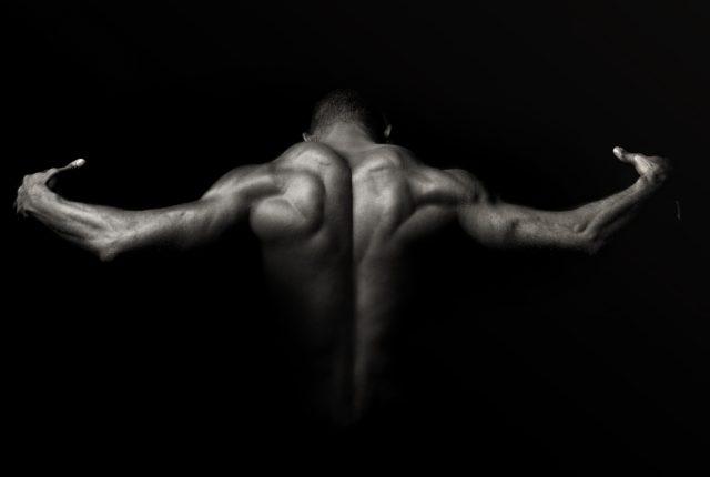 美しい筋肉