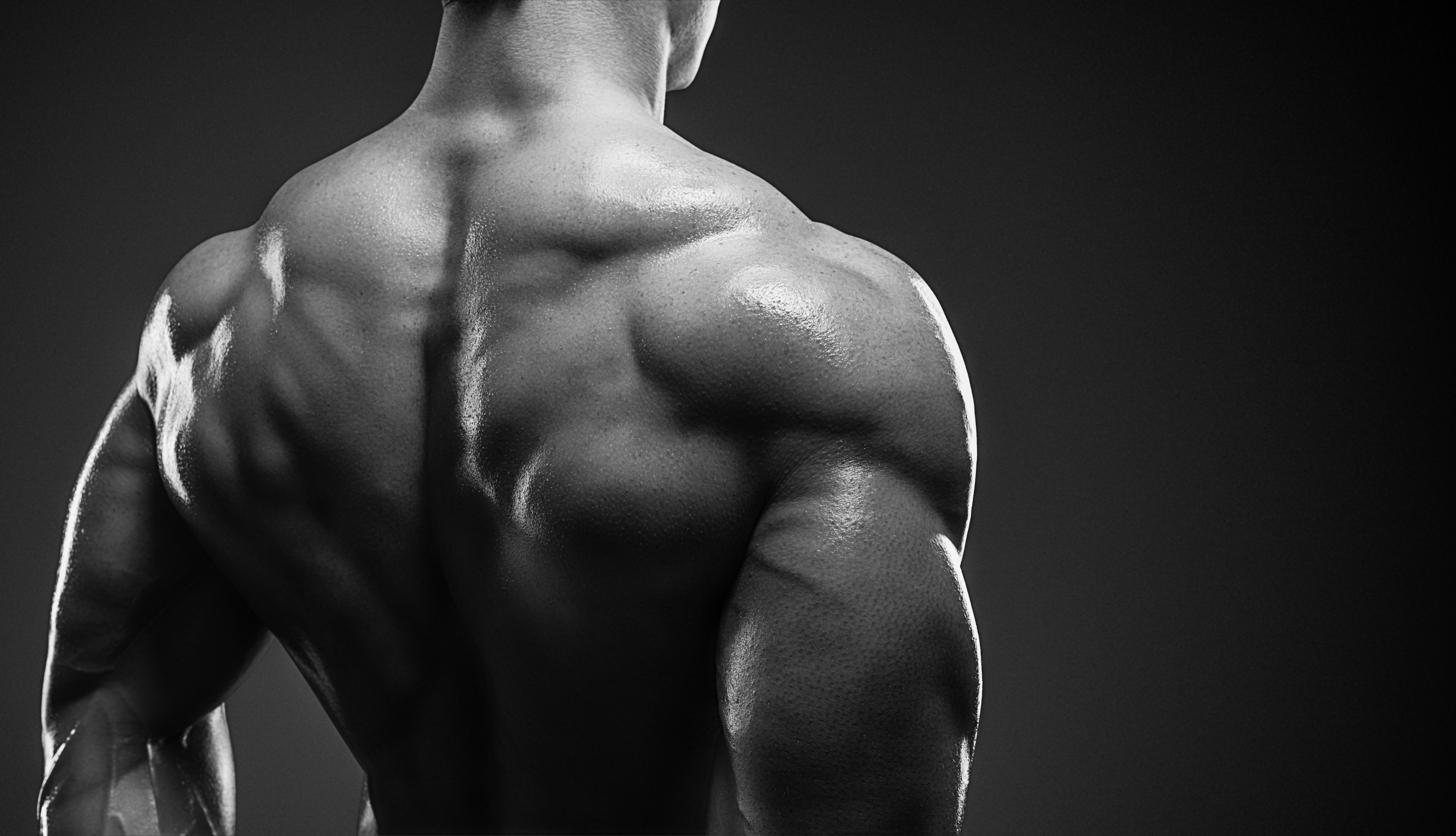筋肉質な背中