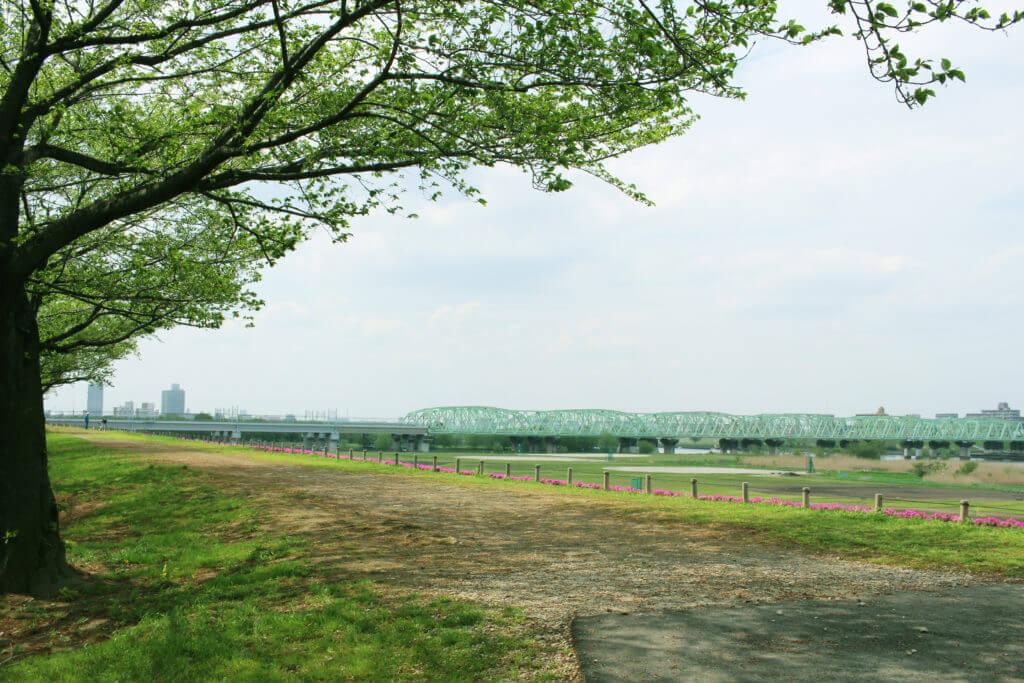 緑のある公園、景色